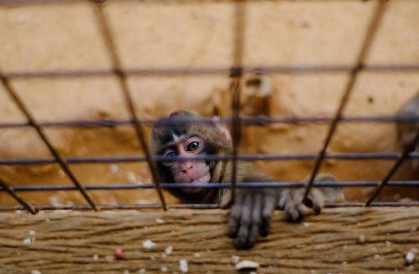 Monkey Park Iwatayama photo by Giovanni Calia via Unsplash