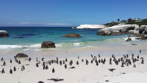 Boulders Beach with Penguins