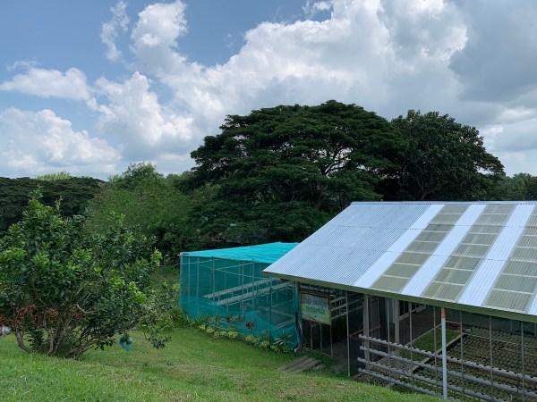 Aquaphonics and Organic Farm in Iloilo