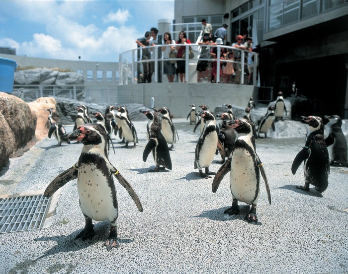 Nagasaki Penguin Aquarium, Nagasaki City
