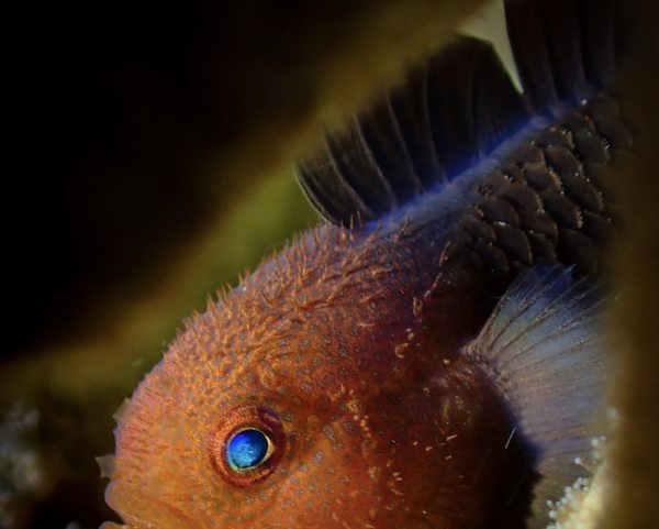 Compact Fish Portrait 2nd Place Lim Sudong from Korea