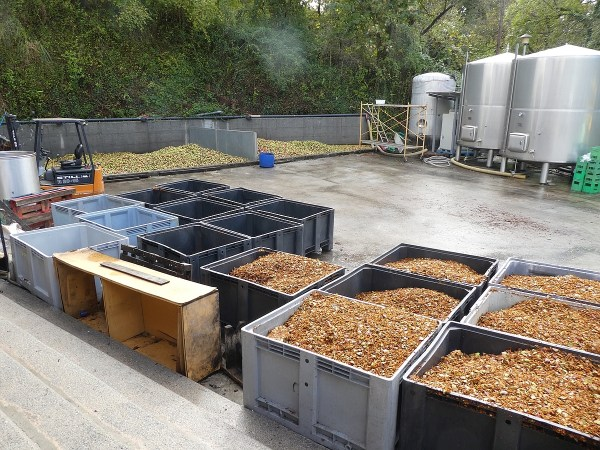 piles of chopped apples waiting to be processed