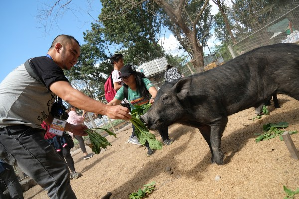 Feeding the wild boars photo by Mac Dillera - NPVB
