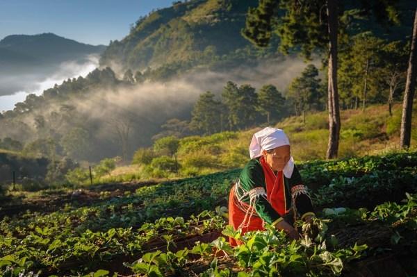 Thai Way of Life in Chiang Mai - Doi Ang Khang
