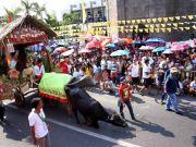 Kneeling Carabao Festival 2019