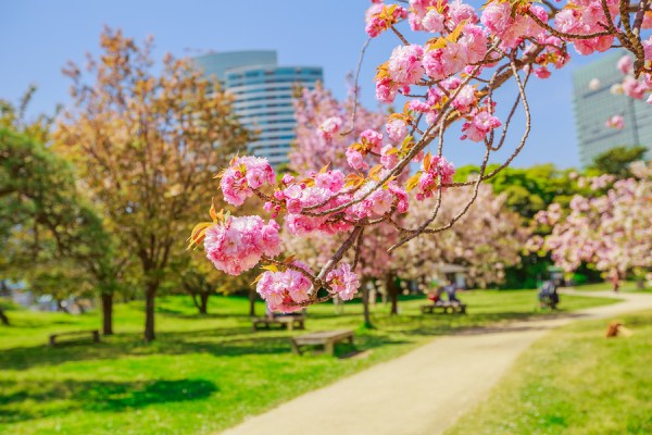 Hamarikyu Gardens - Tokyo Food Trip