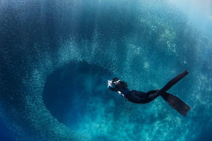Freediver Sardines photo by Jerome Kim