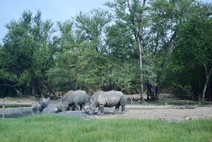 Bangkok Safri Wildlife