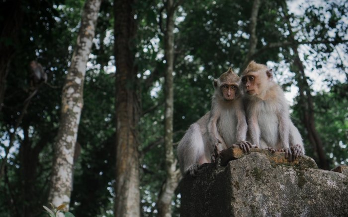Pusuk Pass Monkey Forest photo by @dannypostma via Unsplash