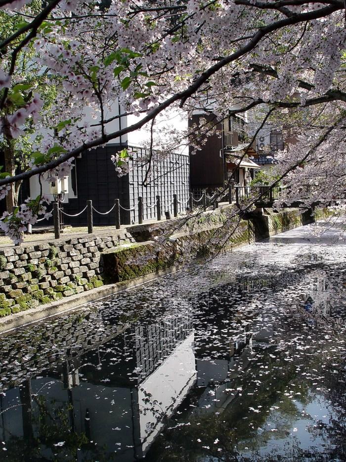 Kinosaki Onsen with Sakura Blossoms