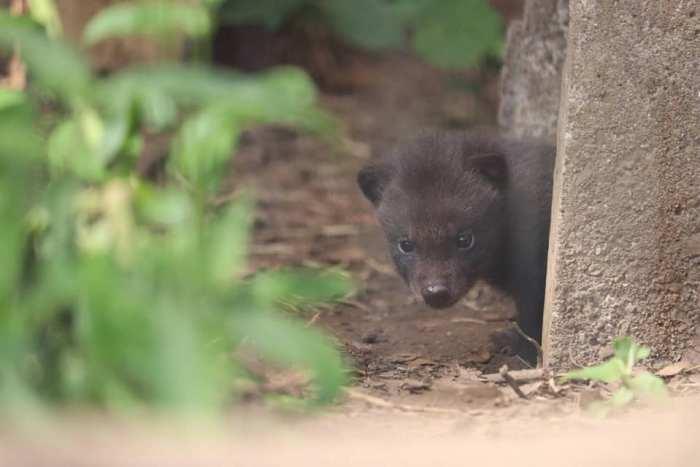 Kumamoto Zoo and Botanical Gardens photo via Kuma Visit FB Page