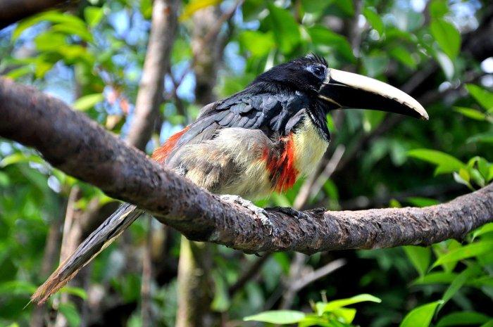Bird Watching in Venezuela