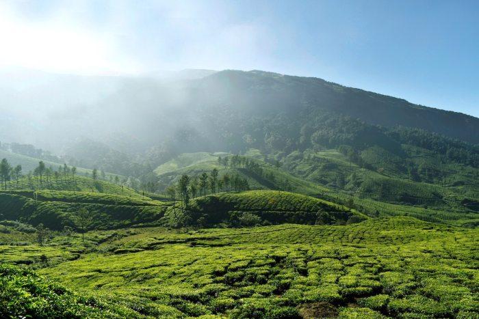 Munnar in Kerala by Mohamed Jasir via unsplash