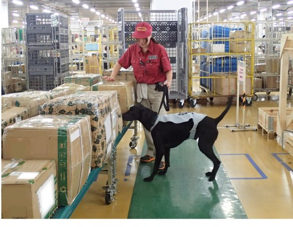 Dog trained to detect international postal deliveries Meat products cannot be imported, even by post.
