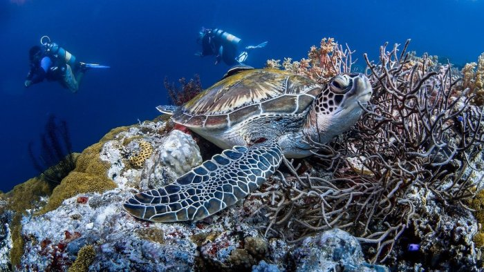 Philippines Top Scuba Diving Destinations