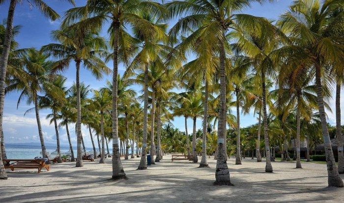 Coconut Trees in Bohol photo via Pixabay
