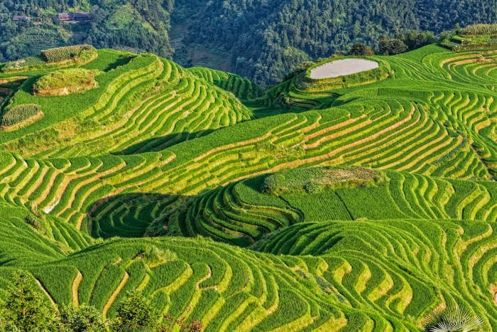Dragon's Backbone Rice Terraces, or Longji Rice Terraces in northern Guilin photo via DepositPhotos