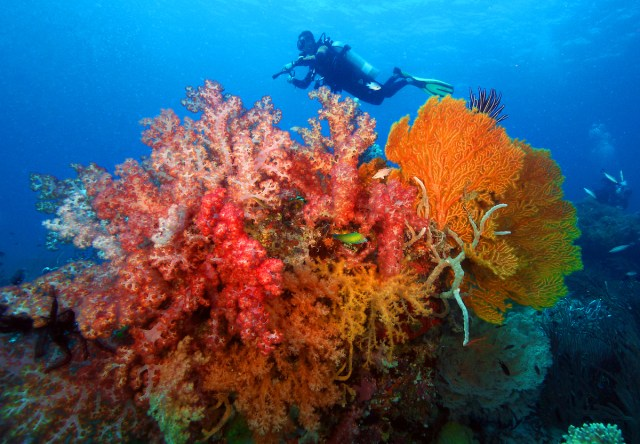 CORON DIVING, DISCOVERY FLEET Dive into the Philippines