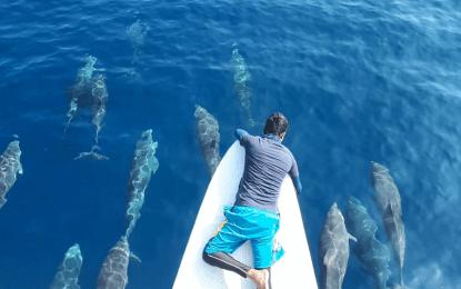 Dolphins at Sarangani Bay