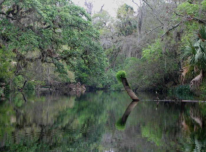 Hillsborough River State Park by Mwanner via Wikipedia CC