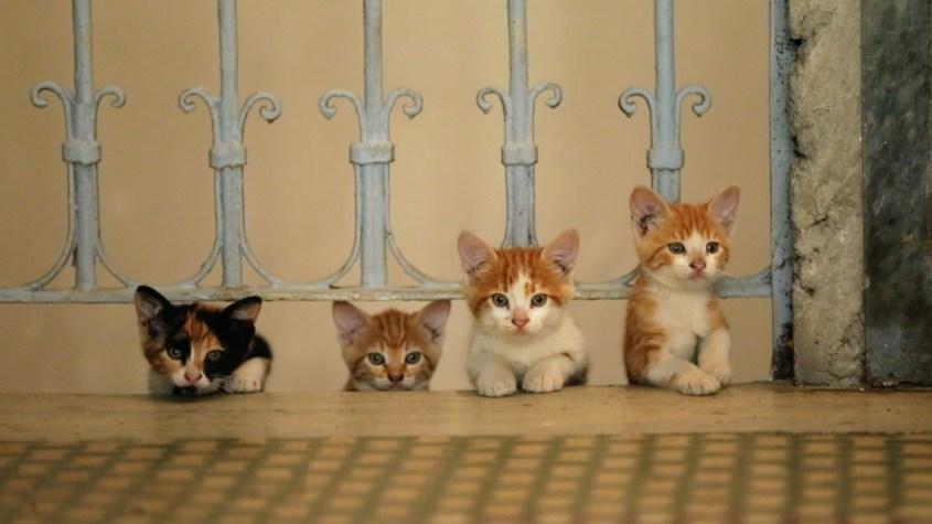 Kedi la città dei gatti-outoutmagazine1.jpg