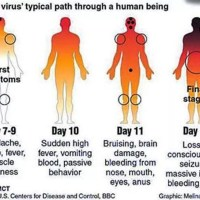 Ebola, The Deadliest And Scariest War