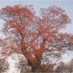 Florestas: para salvar 2011