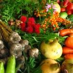 A trama complexa da Agroecologia
