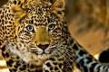 Documentos revelam: até um milhão de animais foram mortos por ano no século 20, para abastecer mercado mundial de peles. Congresso estuda reabrir a caça