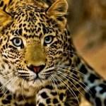 Amazônia, história de um massacre esquecido