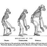 O primata dentro de nós