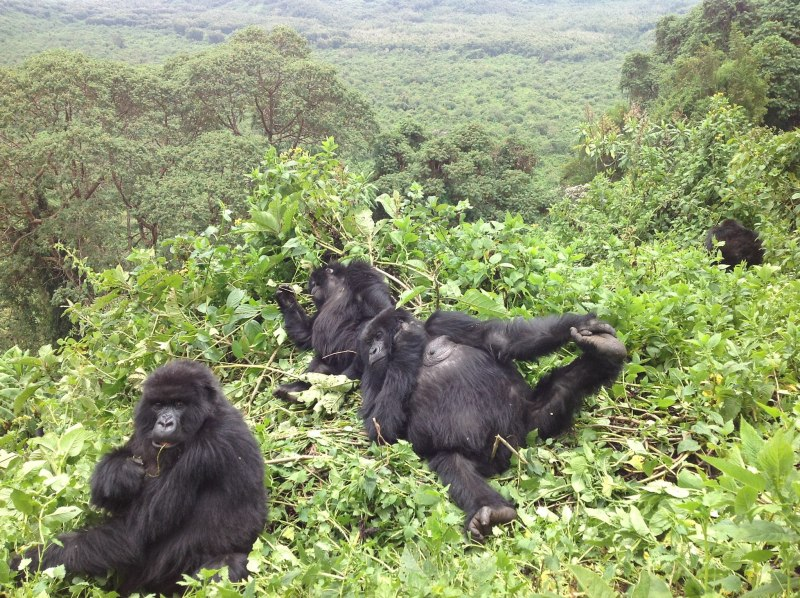 "Africa's Oldest National Park ""Virunga National Park."