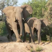 Elephant kills Australian tourist in Namibia