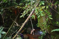 Exploring ogba ngwu (28)