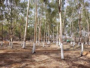 Forest Reserve, Okpara Square, Enugu