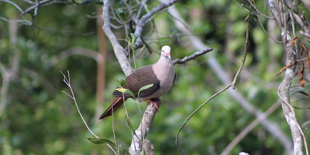 Birdwatching and Hike at Ebony Forest Mauritius