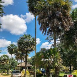 Sarius Palmetum Garden