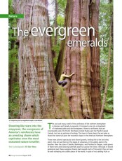 The Evergreen Emeralds-Pacific N American Rainforests