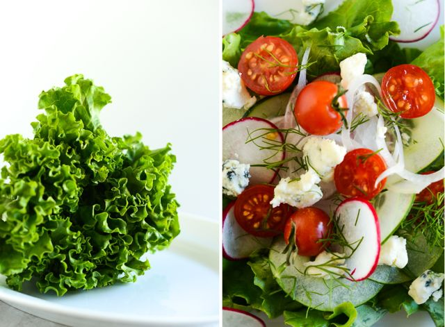Lettuce and Salad Closeup