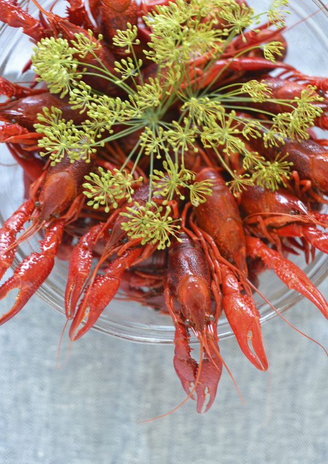 Swedish Crayfish Party with Dill. Västerbotten Pai is a typical accompaniment.