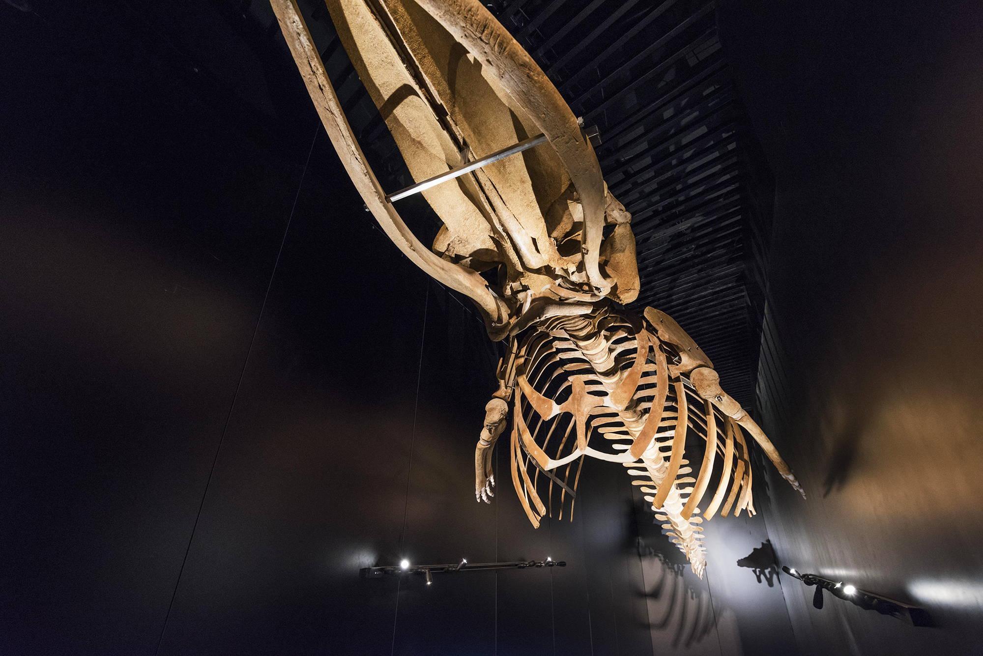 Iluminación museos