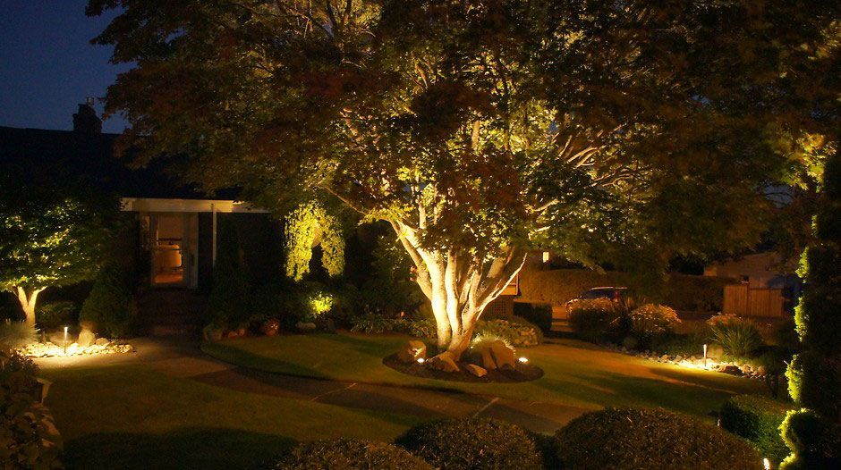 cómo iluminar árboles