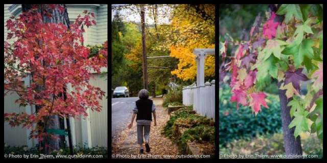 Autumn Color in Nevada City