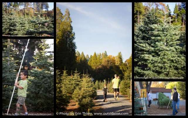 McBurney's Christmas Tree Farm