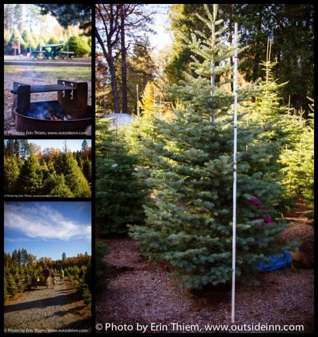 Nevada County Christmas Tree Farm