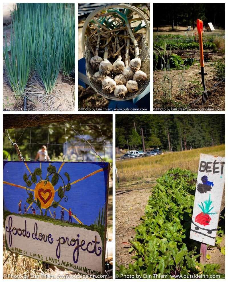 Nevada City Farm, Food Love Project, LLAN photos