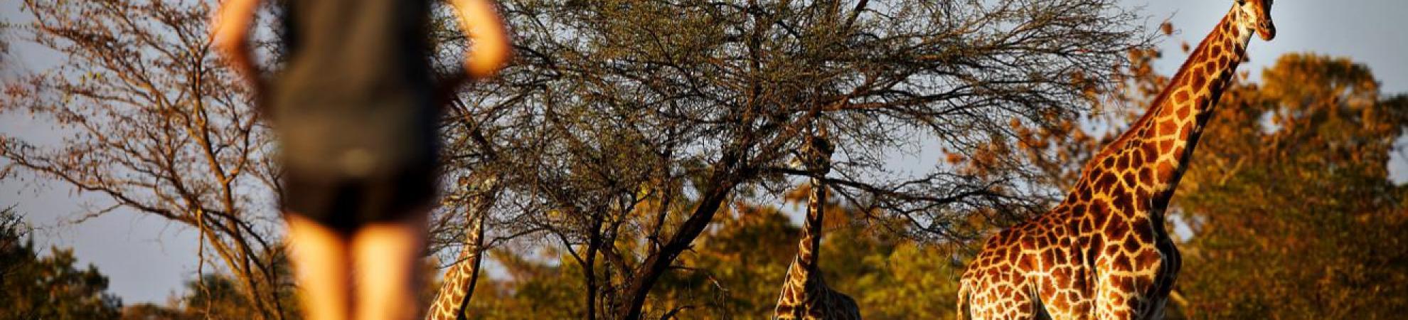 worlds quirkiest events SouthAfrica_BigFiveMarathon_RunnerAndGiraffe_045