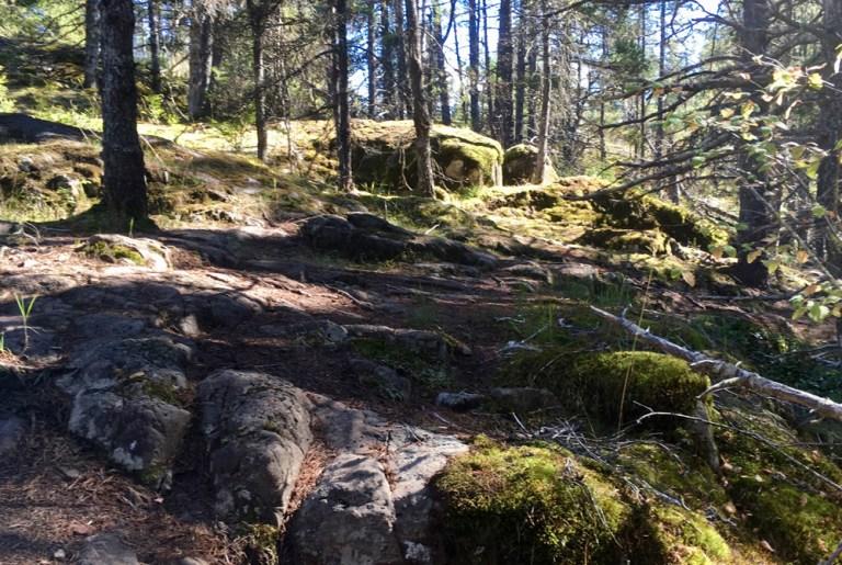 Rainforest in British Columbia, rocks
