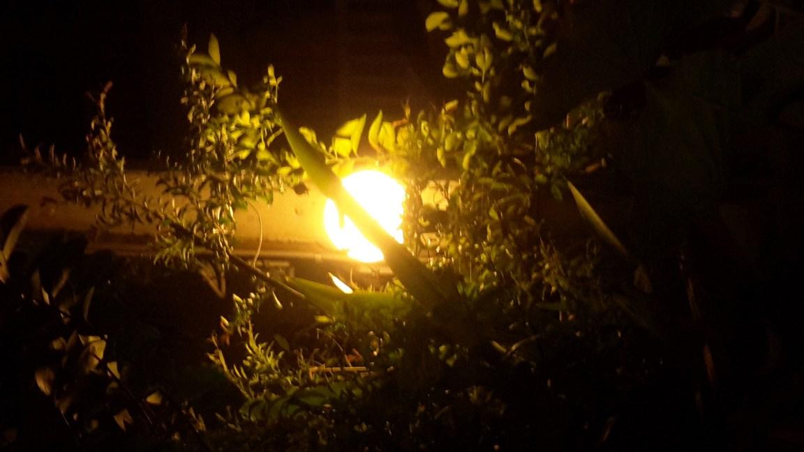 The wonder world appears when the lamp illuminates among woods.