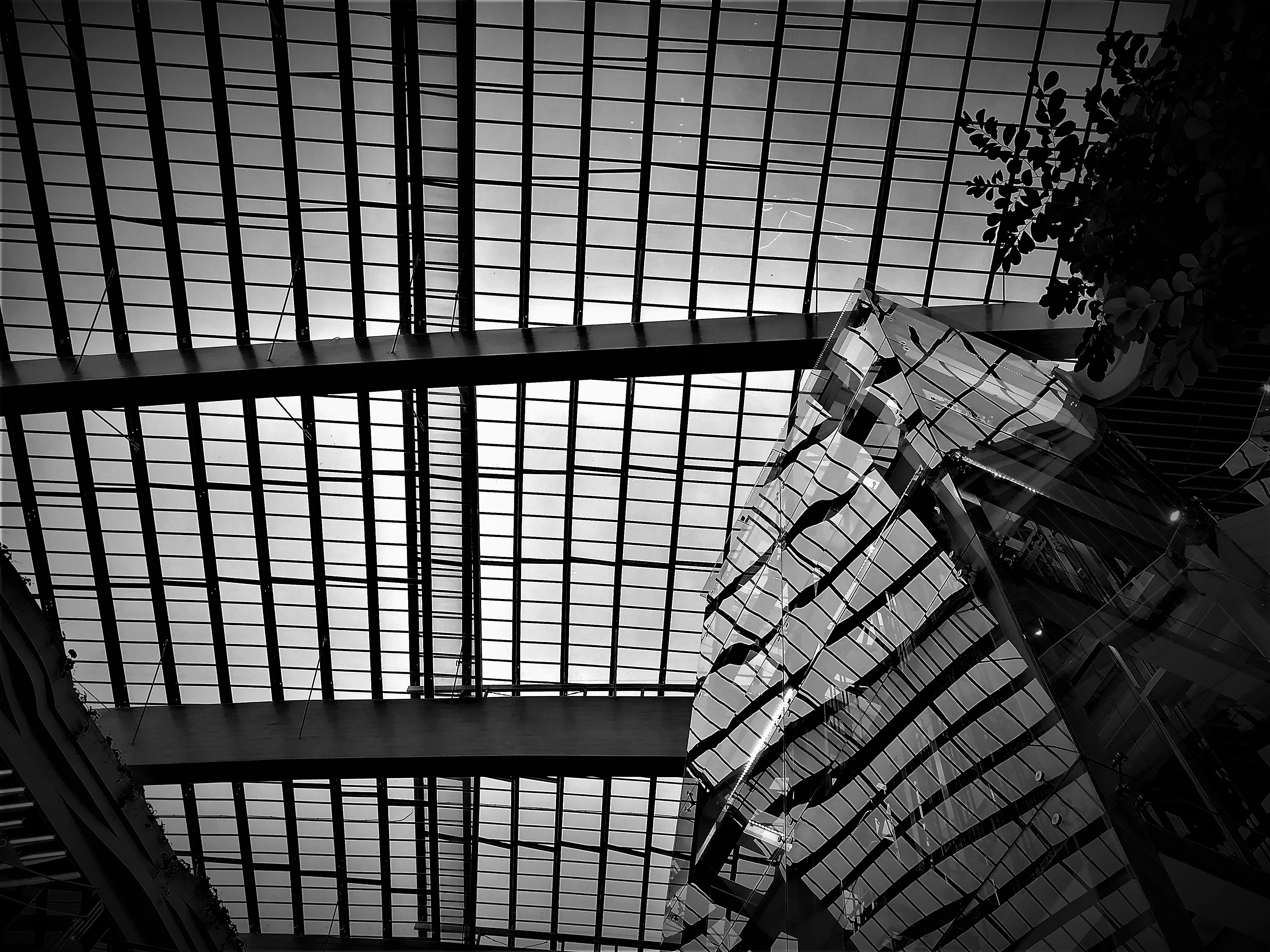 ARTISTIC GREENHOUSE CEILING AT FOODWALK